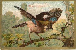 D23 / Chromos Image Oiseaux LE GEAI   / TEXTE  EDUCATIF AU DOS / 2 SCANS - Chromos