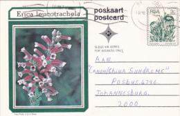 FLOWER, ERICA LEUCOTRACHELA, PC STATIONERY, ENTIER POSTAL, 1979, SOUTH AFRIKA - Afrique Du Sud (1961-...)