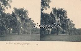 SINGAPOUR - N° 10 - CARTE STEREOSCOPIQUE - LE JARDIN BOTANIQUE - Singapore
