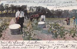 UNITED STATES ETATS UNIS  ATLANTA In The Cotton Field - Atlanta
