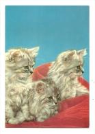 Cp, Animaux, Chats, écrite - Katten