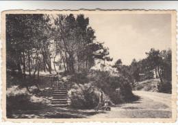 De Den Haan Aan Zee, Het Bosje (pk13125) - De Haan