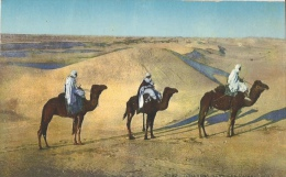 Desert - Touaregs Dans Les Dunes - Sahara - Carte LL N° 6192 - Cartes Postales