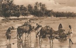 Algérie - Dans L'Oued - Etnie & Culture