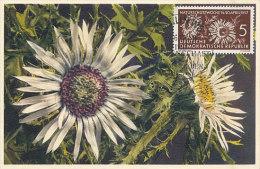 D15886 CARTE MAXIMUM CARD 1957 GERMANY DDR - SILBERDISTEL CP ORIGINAL - DDR