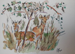 Antilopes Naines (Dik-diks) - Aquarelles