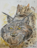 Lynx - Aquarelles