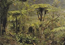 Ile De La Réunion,ile Française,outre Mer,archipel  Mascareignes,océan Indien,foret,BEBOUR BELOUVE,fougere Arborescente - Autres