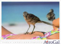 Lote PEP4,  Ecuador, Postal, AeroGal, Galapagos, Ave, Mujer, Bird, Woman, Postcard - Ecuador