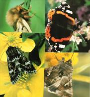 Lot De 4 Cartes Postales : Papillons De îles Féroé. - Faroe Islands