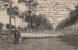 91 MONTGERON  Les Moutons - Montgeron