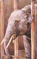 M. McNair Wilson  -  An Elephant In Captivity  -   9054 - Elephants