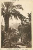 06 - GRASSE - Vue Prise Entre Les Palmiers Du Grand-Hôtel - Grasse