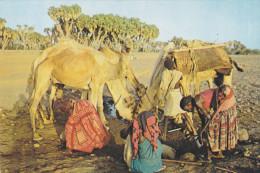 AFRIQUE,territoire Des Afars Et Des Issas,campement Nomade Avant L´indépendance ,devenu Djibouti En 1977,rare - Gibuti