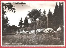 CARTOLINA VG ITALIA - OGGEBBIO (VB) - Villa Elfrida - 10 X 15 - ANNULLO OGGEBBIO 1954 - Italia