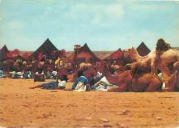 CPM - Halte Dans Le Désert - Algérie