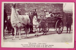 PC9320 Real Photograph Of A Llama Cart - Unclassified