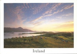 Evening Light, Clew Bay & Croagh Mountains Co. Mayo Real Ireland Design  Used To Australia Front & Back Shown - Mayo