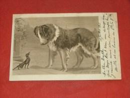 "CHIENS  -   Illustrateur  "" Stanley  Berkeley ""  -   1903  - (2 Scans) - Hunde"
