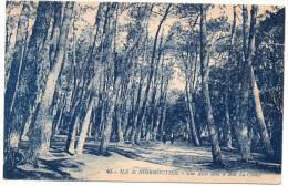 CP, 85, ILE DE NOIRMOUTIER, Une Allée Dans Le Bois , La Chaize, Vierge, Tachée Au Verso - Ile De Noirmoutier