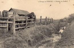 L'ELEVAGE DU PERCHE POULAINS AU PADDOCK 61 ORNE. - France