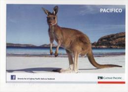 Fre207 Freecard Promocard, Airline Cathay Pacific Airways, Compagnia Aerea, Aerienne, Canguro, Kangaroo - Publicidad