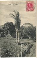 Mahé  Raffia Tree Postally Used 1910 - Seychelles