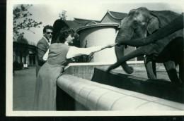 Tier Elefant Den Haag Zoo Tierpark Sw Um 1950 - Ohne Zuordnung