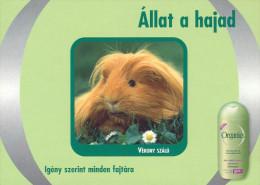 GUINEA PIG * ANIMAL * FLOWER * PLANT * ORGANICS SHAMPOO * Boomerang 010 * Hungary - Animaux & Faune