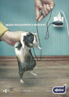 GUINEA PIG * ANIMAL * DJUICE * PANNON GSM * TELENOR * MOBILE TELECOMMUNICATIONS * CELL PHONE * EstMedia 021 * Hungary - Animali