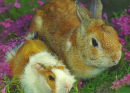ANIMAL * GUINEA PIG * RABBIT * BUNNY * FLOWER * PLANT * Elveszett Allatok 01 * Hungary - Animali