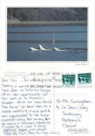 Beluga Whales, Saint-Laurent, Quebec, Canada Postcard Posted 1998 Stamp - Quebec