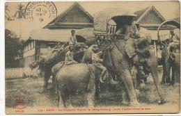279 Les Elephants Royaux De Luang Prabang Jeune Elephant Tetant Sa Mere Allaitement - Laos