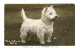 Cp, Animaux, West Highland Terrier - Cani
