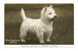 Cp, Animaux, West Highland Terrier - Chiens