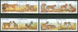 Sierra Leone 1981 Cats And Kittens MNH** - Lot. 2321 - Sierra Leone (1961-...)