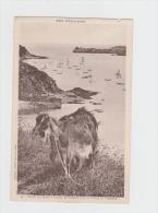 35 - CANCALE - Pointe Du Hock Et Rocher De Cancale Près La Pointe De Grouin - Chèvre - - Non Classés