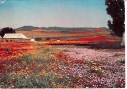 Namaqualand  Kamiesberg.  Cape South Africa - Afrique Du Sud