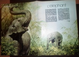 DOCUMENT ANIMALIER ILLUSTRE L ELEPHANT - Old Paper