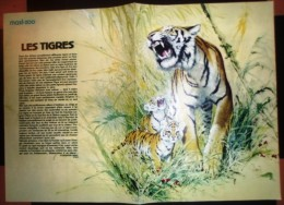 DOCUMENT ANIMALIER ILLUSTRE LE TIGRE - Verzamelingen