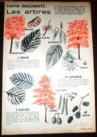 DOCUMENT ANIMALIER ILLUSTRE ARBRE CHARME ORME AULNE - Collections