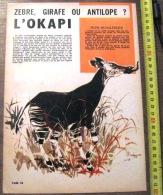DOCUMENT ANIMALIER ILLUSTRE PAR RENE HAUSMAN L OKAPI - Old Paper