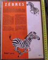 DOCUMENT ANIMALIER ILLUSTRE PAR RENE HAUSMAN LE ZEBRE - Collections