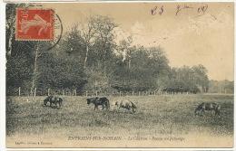 Entrains Sur Nohain Le Chateau Poneys Au Paturage Edit Lepiffre Mauvais Etat Grattages - France