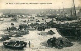 Pays CANCALAIS   Triage Des Huitres - Visvangst