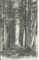 61/ ORNE...Une Allée Du Parc De La BERMONDIERE, Près COUTERNE - France