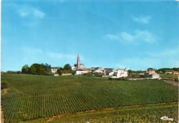 Cpsm SAINT FIACRE DU MAINE (L.Atl)   Vue Générale Prise Du Bout D'une Vigne    (20.90) - France