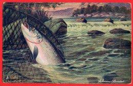 [DC6202] PESCA DEL SALMONE - FIRMATA - TUCK'S - OILETTE N.3288 - Old Postcard - Pesci E Crostacei
