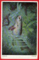 [DC6203] LACHSFORELLE - LA TROTA SALMONATA - Old Postcard - Pesci E Crostacei