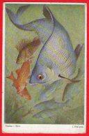 [DC6204] BRACHSE BLEIE - PESCI - Old Postcard - Pesci E Crostacei
